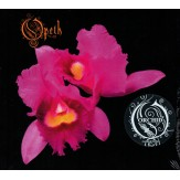 Orchid CD DIGI